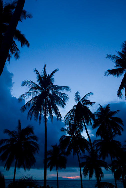 Palm trees in blue
